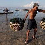 Algenanbaudörfer für Ostindonesien