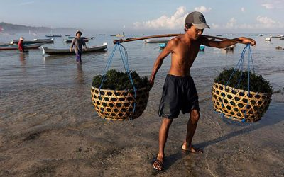 Seaweed Farming Villages for Eastern Indonesia