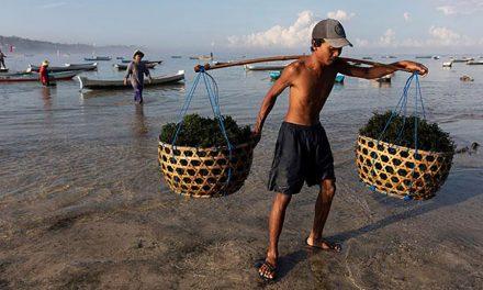 Aldeias de cultivo de algas marinhas no leste da Indonésia
